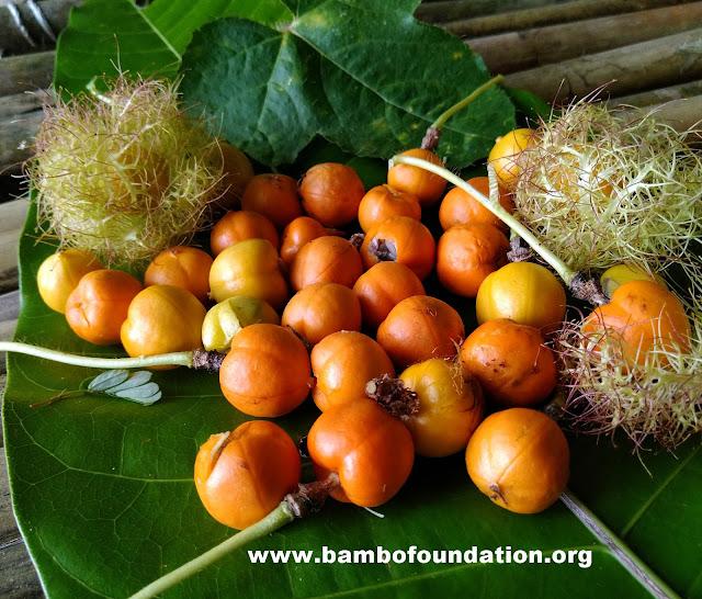 Khasiat buah rambusa