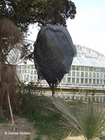 Tightly wrapped small tree, like a cocoon - Kyoto Botanical Gardens, Japan