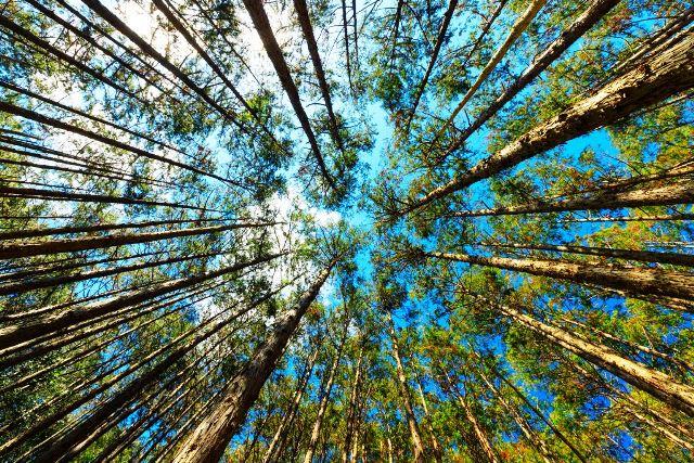 O banho de floresta é uma imersão na natureza e consiste em aproveitar o momento para aguçar os sentidos e dar atenção total ao que o ambiente tem a oferecer Stephane Bidouze/Shutterstock.com