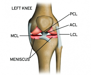 http://kneeandshoulderindia.com/knee-procedures/lcl-injury-treatment/index.html