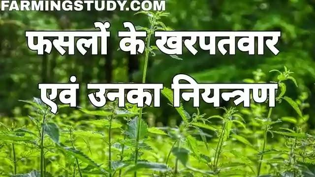 गेहूं, धान, मक्का इत्यादि फसलों में लगने वाले खरपतवारों के नाम, crop weeds and their control in hindi, विभिन्न फसलों में लगने वाले खरपतवारों का नियन्त्रण कैसे करें