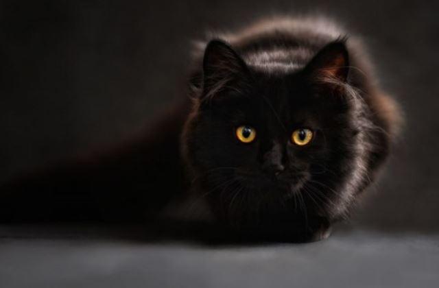 mimpi kucing hitam
