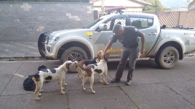 Em Operação Caça Zero, Ambiental flagra caçadores  em Eldorado e apreende cinco cães farejadores  entregues ao GPA e à Amicão