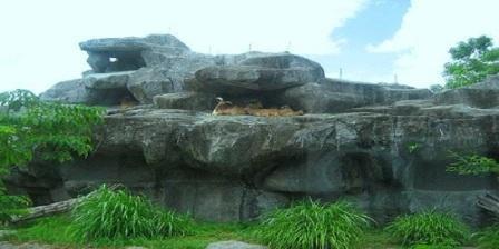 Bali Zoo Park  bali zoo park bali bali zoo park tiket bali zoo park price bali zoo park reviews bali zoo park tiket masuk