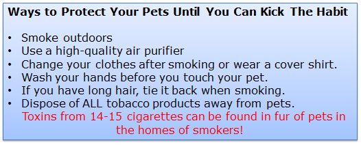 Blue list of ways to protect your pets from harmful smoke