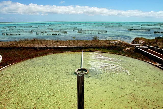Caicos Conch Farm and Island Sea Center, Providenciales