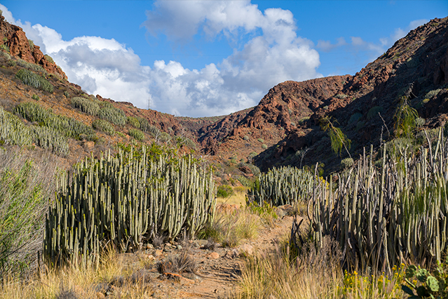 Wanderung zu den Wasserfällen im Barranco del Toro | San Agustín/Maspalomas | Wandern auf Gran Canaria 01