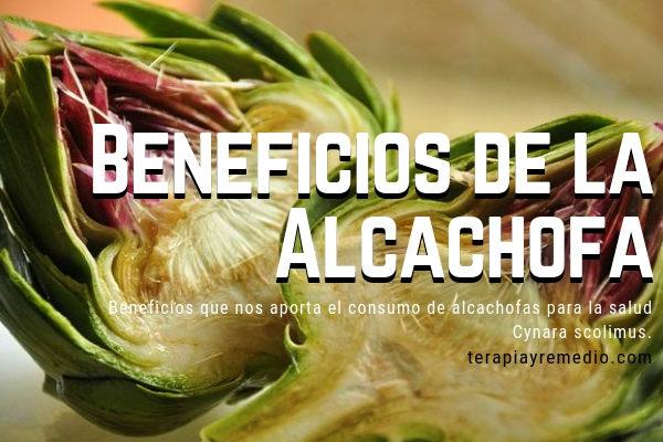 Los beneficios que nos aporta la Alcachofa para la Salud son muchos, aquí te lo contamos