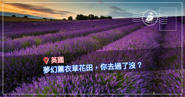 【浪漫花海】誰說看薰衣草一定要去南法?英國 7 大薰衣草田讓你盡情美拍到不要不要的❤