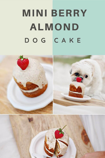 Mini Berry Almond Dog Cake