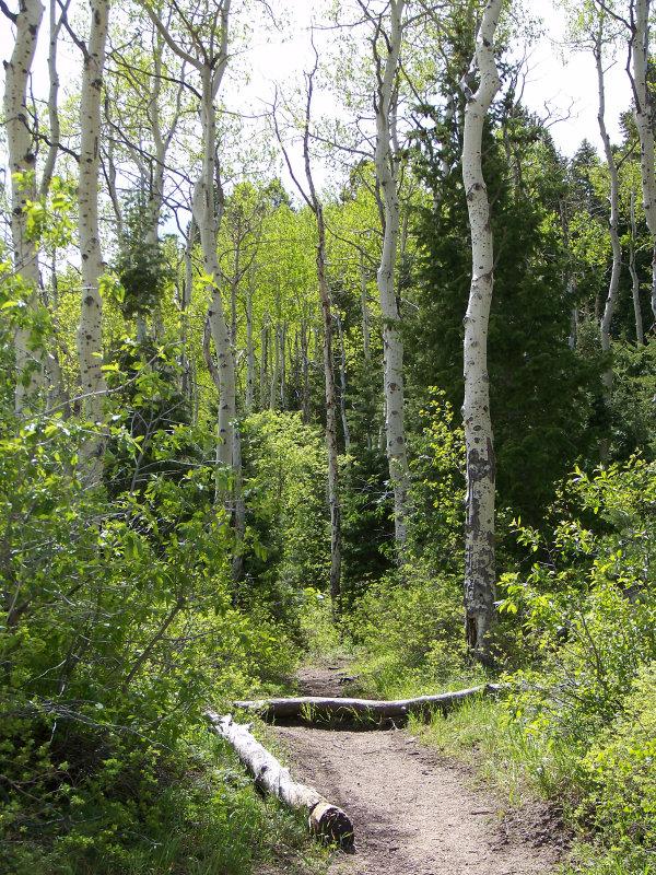 Runaway Bridal Planner: Butterfield Canyon, Utah