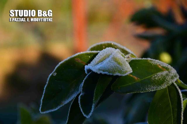 Παγετός στην Αργολίδα - Δείτε πόσο έπεσε η θερμοκρασία