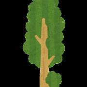 セコイアの木のイラスト
