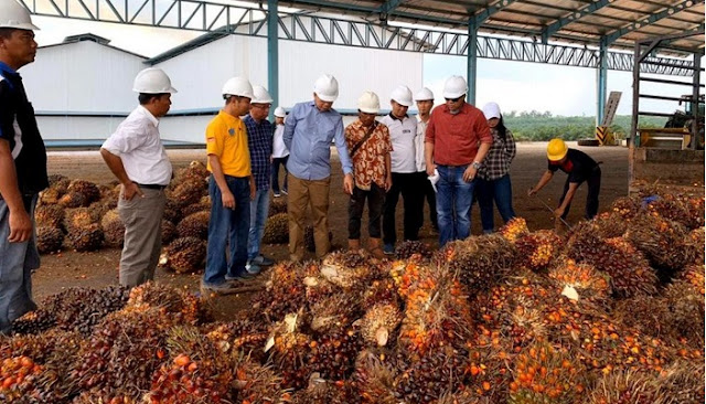 Bupati Barito Utara Berharap Bisa Bangun Pabrik Sawit