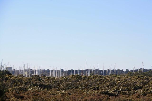 Warringine Wetlands, Hastings boat masts