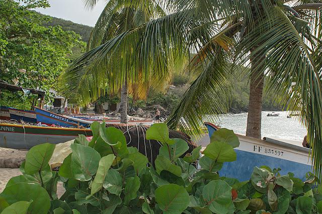 Gommiers sur la plage de l'anse Dufour
