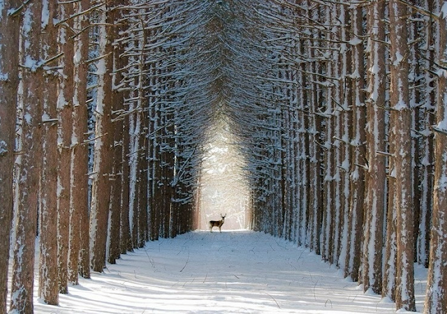 Quebec Forest, Canada