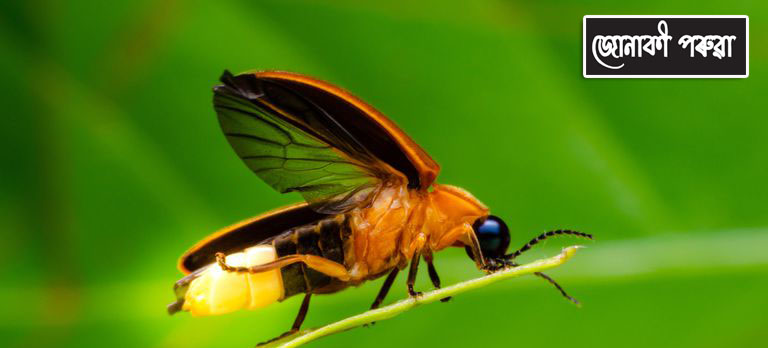 Junaki Poruwa Fireflies in Assam