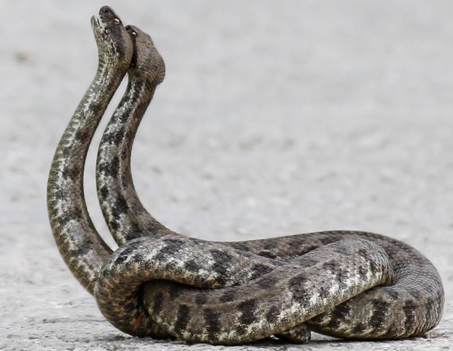 своём змеи кипра фото еще могут сами