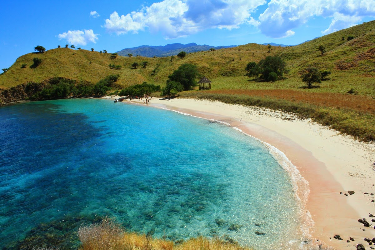 Image result for pantai pink flores