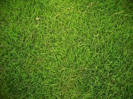 rumputgolf