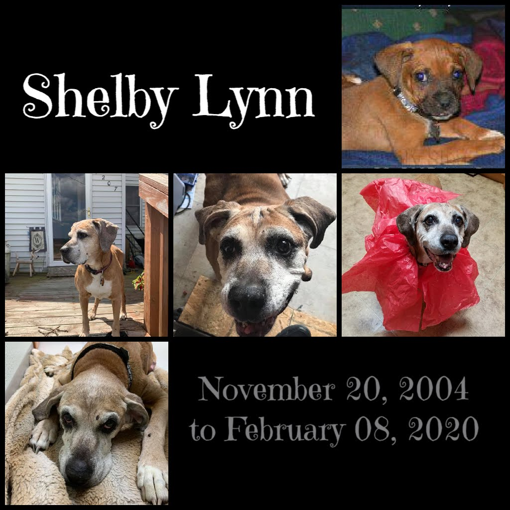 In Memory of Shelby