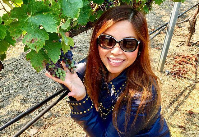Foto Video Tempat Wisata Negeri Anggur Napa & Sonoma, Wajib Bagi Traveler Untuk Coba Jalan-Jalan Kesana