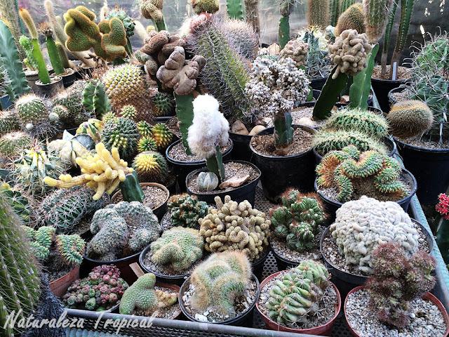 Colección mixta de cactus
