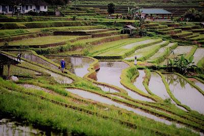 Forme agricoltura sostenibile come quelle naturali