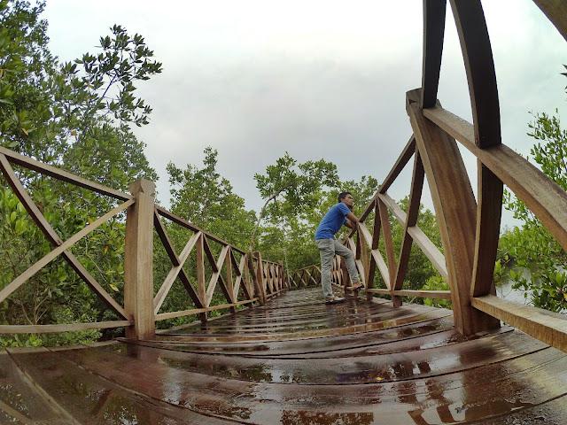 Keliling Hutan Mangrove Langsa