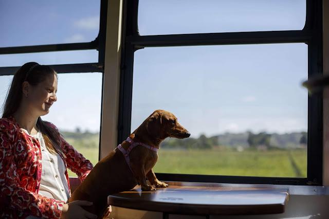Blog Apaixonados por Viagens - Paraná - Curitiba - Serra Verde Express - Pet Friendly