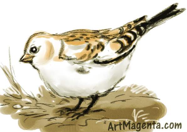 Snow bunting is a bird drawing by artist and illustrator Artmagenta