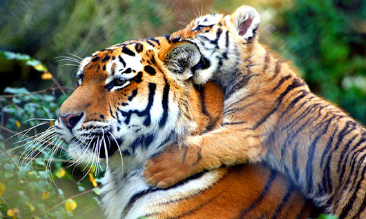 Best Jim Corbett National Park Tour Packages from Delhi for Wildlife Lovers by Wonder World Travels
