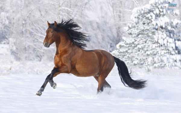 Horse Images Free Download for Whatsapp