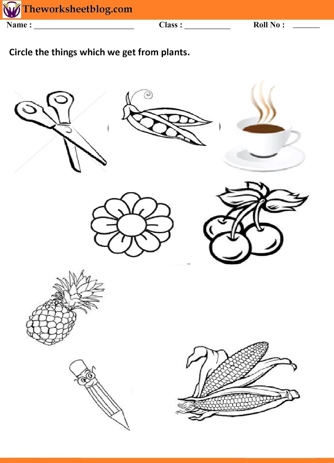 Plants Around Us Worksheets