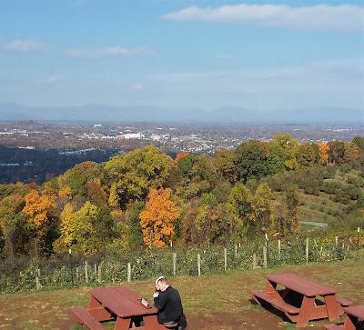 apple picking, Carter Mountain, Charlottesville, VA