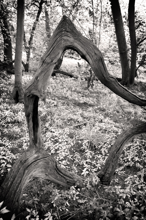 Beautiful work of natural art from a tree at the Wildlife Trust Hayley Wood Nature Reserve
