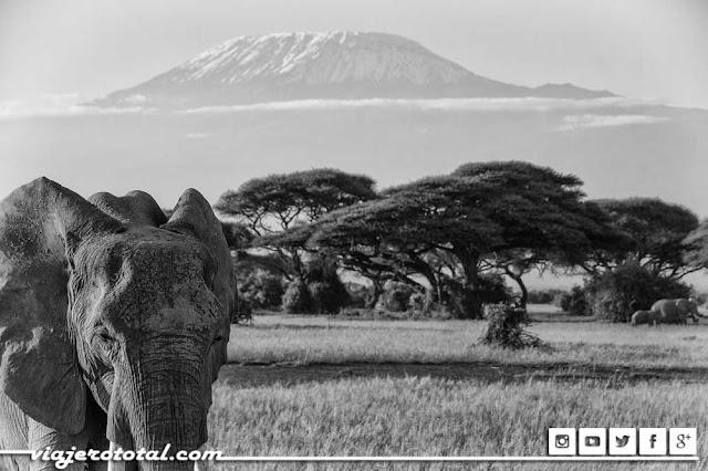 Safari en África - Kilimanjaro