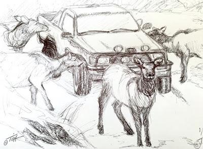 """""""Funny Face"""" elk sketch 5 ©2020 Tina M.Welter"""