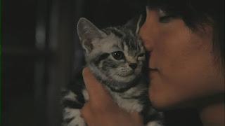 kisah pershabatan manusia dan kucing