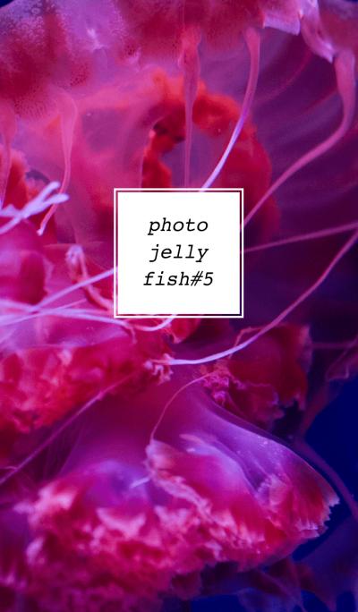 PHOTO-JELLYFISH#5