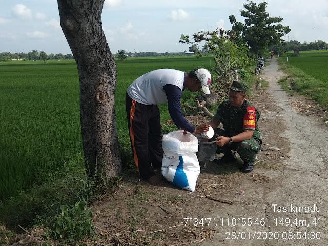 KodimKaranganyar - Turun ke Sawah Babinsa Desa Kaling Dampingi Petani Melaksanakan Pemupukan Padi
