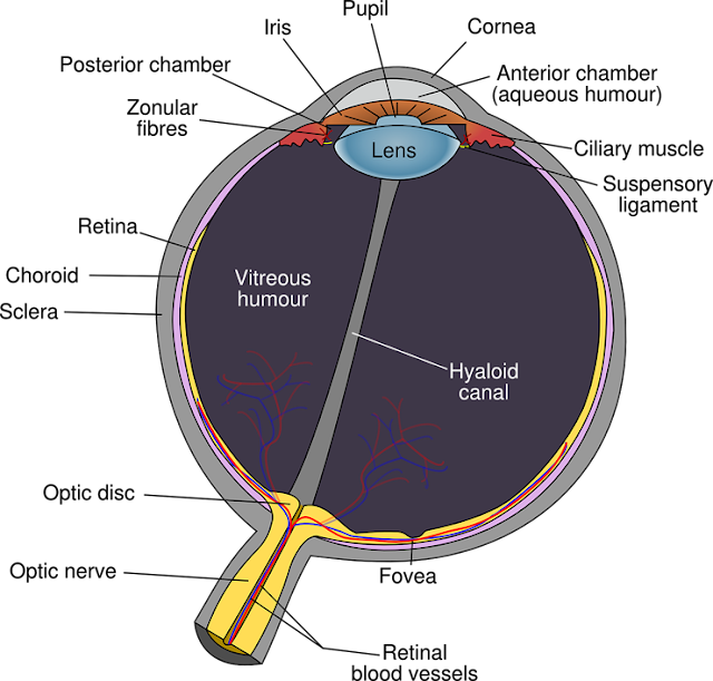 Risk of Blindness From This Retina Related Disease