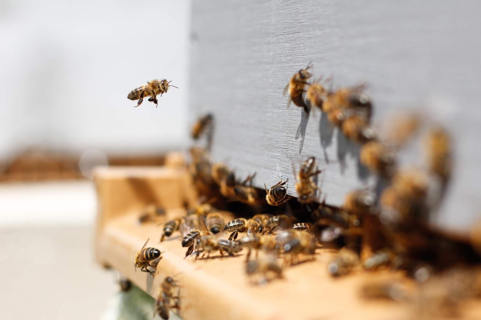 Para Lebah Siap Bela Ustaz Abdul Somad