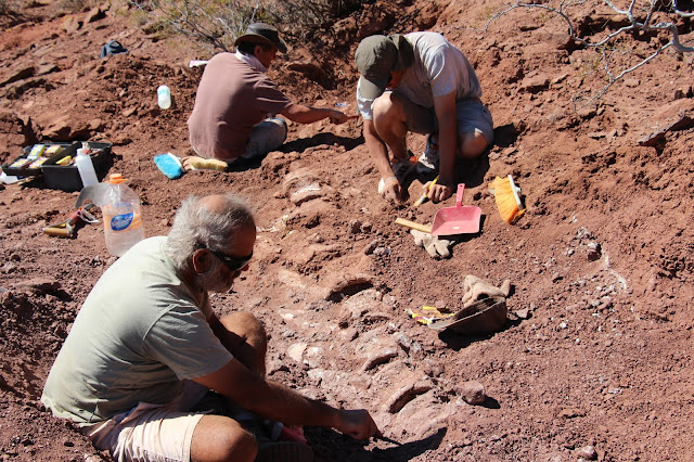 New Patagonian dinosaur may be largest yet