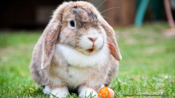 Cara membuat Kandang Kelinci yang Sederhana Memelihara