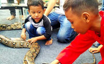 Sahabat Reptil Bekasi Di Rumah Pelangi