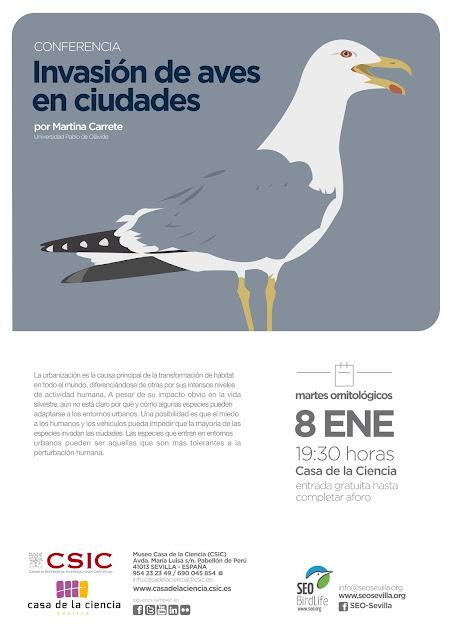 Conferencia: Invasión de aves en ciudades. Por Martina Carrete, 8 de Enero 2019. Grupo Local SEO-Sevilla.