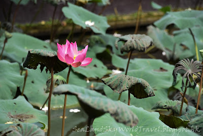 cafe lotus, 峇里, bali, ubud
