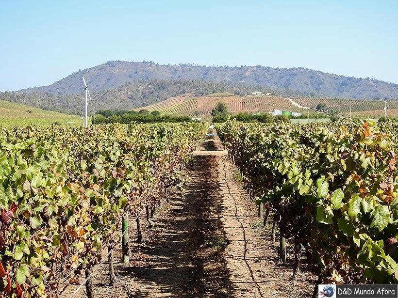 Vinhas da Vinícola Casas del Bosque - Vinícolas chilenas - Valle Casablanca